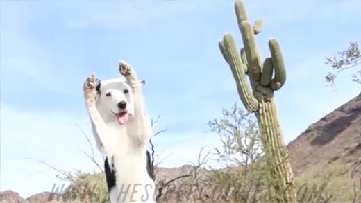Gặp gỡ chú chó lưu diễn vòng quanh thế giới hút triệu người xem