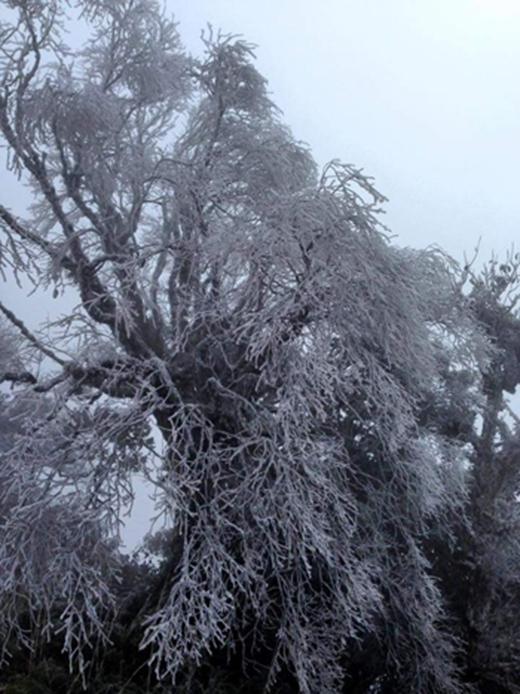 Cành cây trắng xóa băng tuyết. Ảnh: Văn Hoan/Vnexpress.net