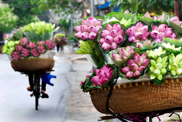 """Những bông sen nhô trên mặt nước, theo chân người """"rong ruổi"""" khắp những con phố Hà Nội. (Ảnh: Internet)"""
