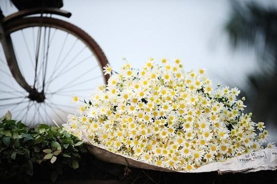 Đẹp nao lòng những mùa hoa rực rỡ giữa lòng Thủ đô