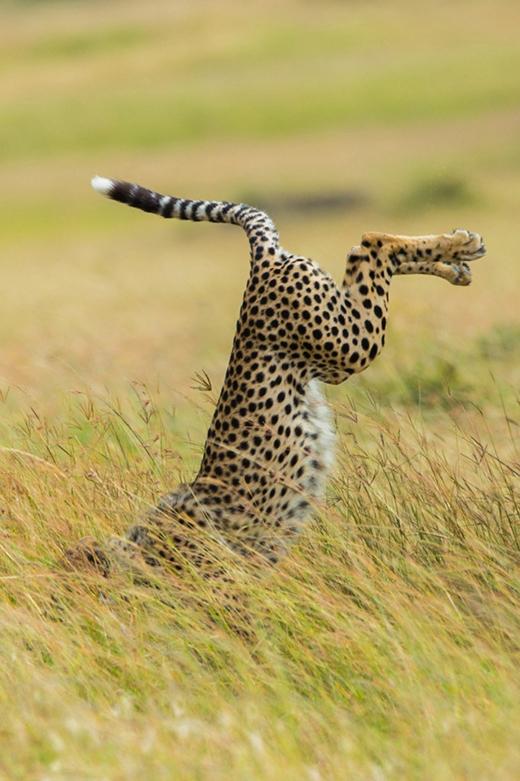 (Ảnh: Mohammed Alnaser / Via comedywildlifephoto.com)