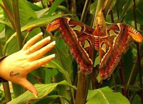 Sửng sốt với những con côn trùng lớn nhất hành tinh