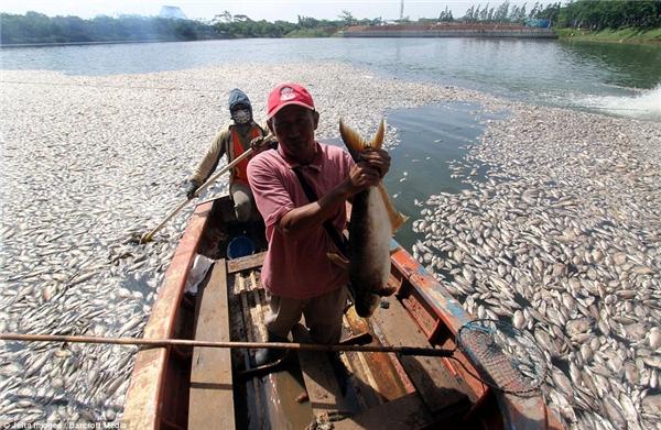 Một ngư dân vớt được con cá lớn đã chết trong hồ nước này. Ảnh: Internet
