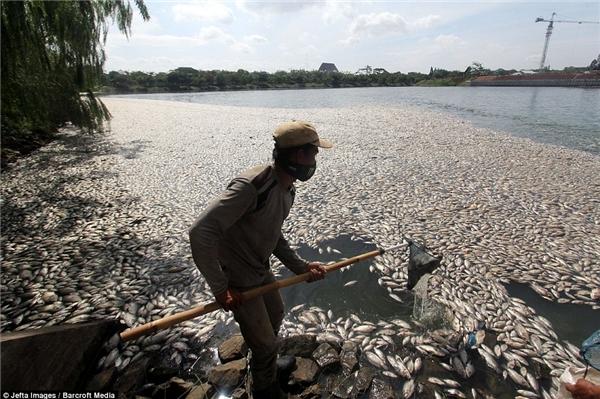 Hiện tượng cá chết bất thường khiến người dân vô cùng hoang mang. Ảnh: Internet