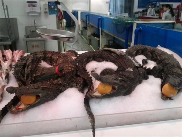 Cá sấu được bán ở siêu thị. (Ảnh: Internet)