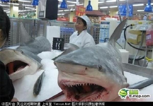 Cá mập cũng được bán ở... siêu thị. (Ảnh: Internet)