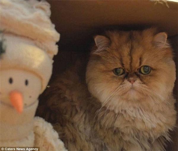 Sững sờ với biểu cảm của chú mèo có bộ mặt