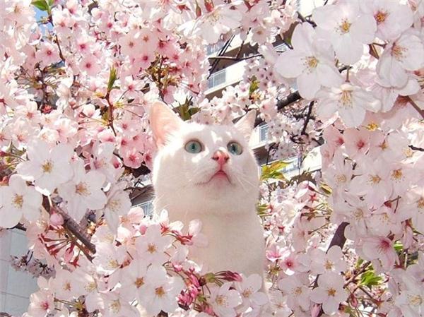 """""""Ồ... Mùa xuân đến làm em hết hồn!"""".(Ảnh: Internet)"""