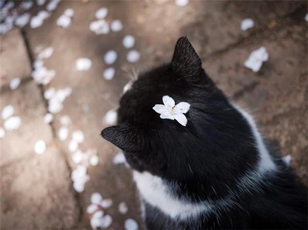 Tôi thấy hoa trắng trên lông đen.(Ảnh: Internet)