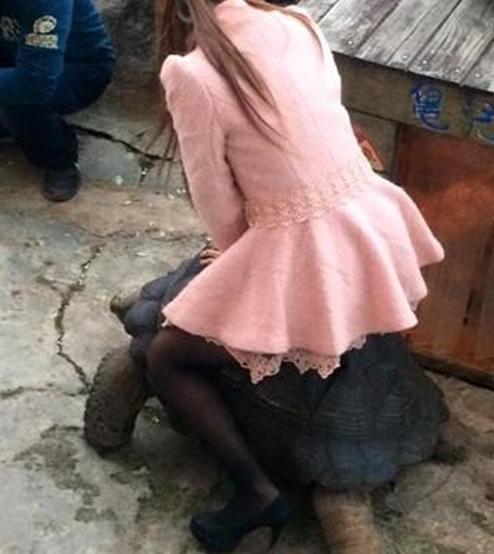 Thiếu nữ ngồi trên lưng rùa gây bức xúc.