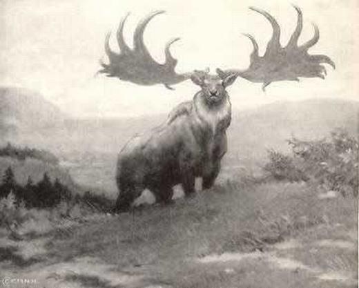 Hươu Ireland đặc trưng bởi tấm sừng lớn. (Ảnh: Oddee)