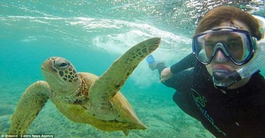 Chú rùa này có vẻ không quan tâm đến chuyện gì đang xảy ra xung quanh mình. (Ảnh: Internet)