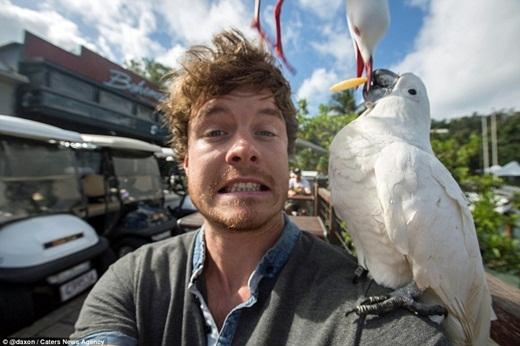 Anh đã vô tình chớp được khoảnh khắc độc đáo có một không hai khi một chú mòng biển từ đâu bay đến và đánh cắp thức ăn từ miệng chú vẹt đang mải mê tự sướng với Allan.(Ảnh: Internet)