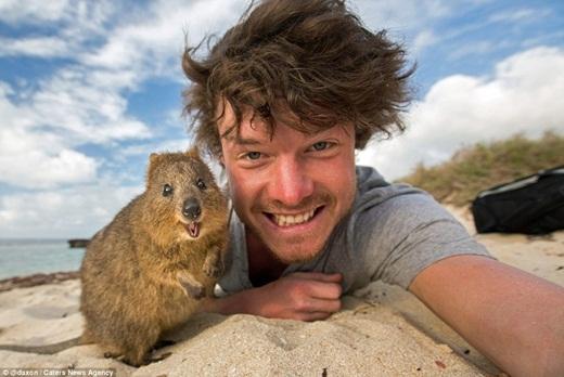 Chú chuột túi quokka là một trong những loài động vật được Allan yêu thích vì chúng cực kì tò mò, luôn vui vẻ và rấtthân thiện.(Ảnh: Internet)