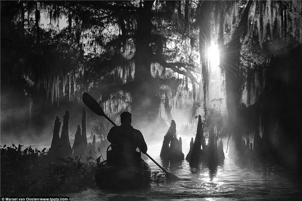 Một người đàn ông ở Louisiana chèo thuyền dọc con sông, phía trước là cây cypress khổng lồ trong một buổi sáng mù sương đã giúp nhiếp ảnh gia Marsel van Oosten (Hà Lan) giành giải thưởng cao nhất.