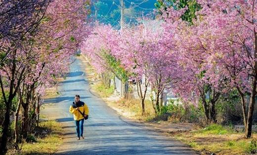 Lạc giữa sắc hồng của thung lũng hoa đào - một trải nghiệm đáng nhớ mà tuổi trẻ của ai cũng nên có. (Ảnh: Internet)