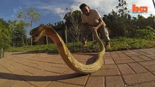 Cận cảnh nghề nguy hiểm nhất thế giới: điều khiển rắn