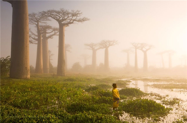 Người phụ nữ đang trầm tư giữa khu rừng bao báp ở Madagascar.