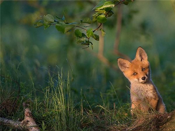 Chú sóithân thiện, và cũng rất dễ thương.
