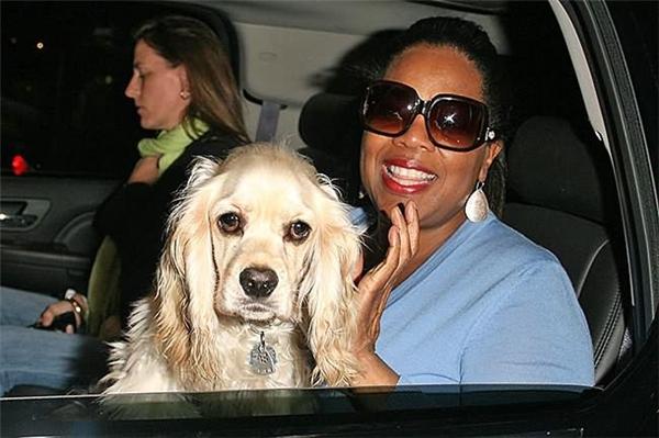 Tuy không đeo những trang sức đắttiền như những chú chó khác nhưng vật nuôi của Oprah lạicó một sức khỏe vô cùng tốt. (Ảnh: Internet)