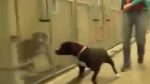 Xúc động trước phản ứng của chú chó hoang được nhận nuôi