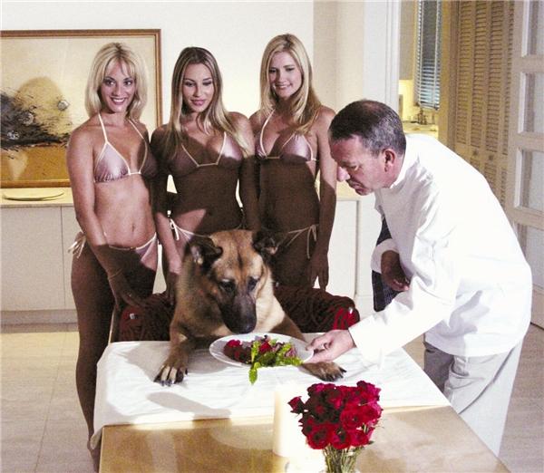 Cuộc sống xa hoa của chú chó này. (Ảnh: Internet)  Một góc khác của chú cho triệu đô Gunther IV. (Ảnh: Internet)