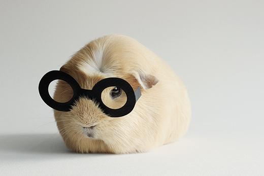 "Booboo ""Potter""(Ảnh: lieveheersbeestje/DeviantART)"