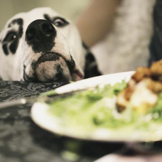 """""""Cho em miếng đi,ăn một mình rồimắc nghẹn là em không quan tâm đâu!"""". (Ảnh: BuzzFeed)"""