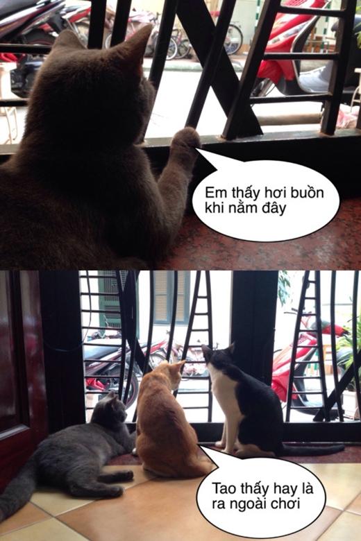 """Khi thú cưng """"lên tiếng"""". (Ảnh Internet)"""