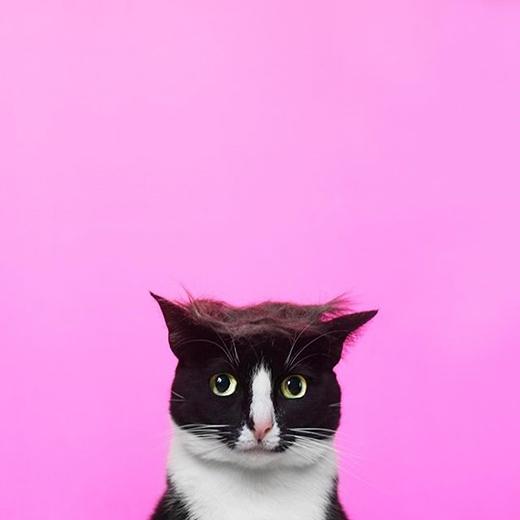 Chẳng lẽ đây là chú mèo quý tộc trong truyền thuyết?(nguồn IG:princesscheeto)