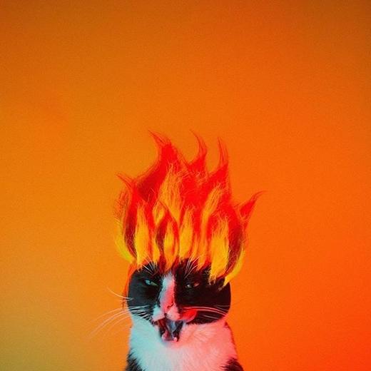 """""""Này anh chủ kia. Anh có thấy 'Mèo Siêu Xayda'nổi giận chưa hả?"""".(nguồn IG:princesscheeto)"""