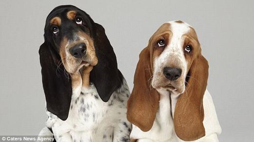 """""""Bấn loạn"""" trước bộ ảnh về những cặp đôi cún cưng siêu đáng yêu"""