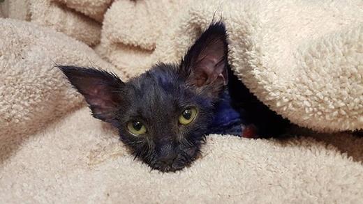 Ám ảnh đôi mắt sợ hãi của con mèo bị nhuộm tím và ngược đãi
