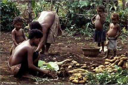 Hình ảnh thường thấy ở Trobriandchỉ có phụnữ và trẻ em thu hoạch khoai lang vì các anh chàng đã trốn ở trong nhà mình để được... an toàn. (Ảnh: Internet)