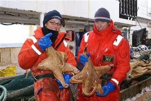 Những con sao biển khổng lồ đã được tìm thấy bởi các nhà khoa học ở Nam Cực vào năm 2008. (Ảnh: Internet)