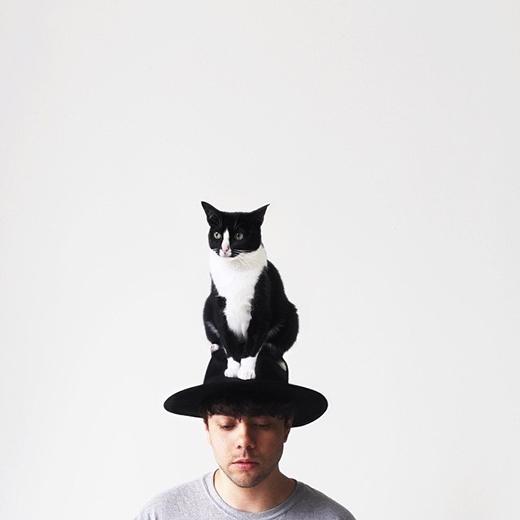 Hãy cho mèo một điểm tựa, chúng có thể ngồi bất kì đâu.(nguồn IG:princesscheeto)