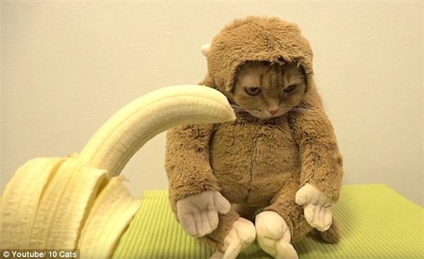 Con mèo được hóa trang thành khỉ. (Ảnh: Internet)