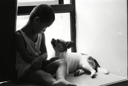 Cảm xúc tương tự cũng xảy ra ở loài chó.(Ảnh: Internet)