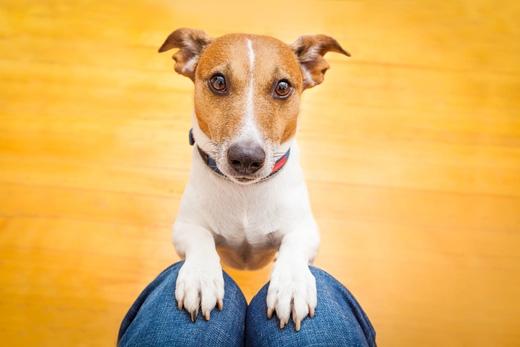 Chó sẽ giúp ích rất nhiều cho những người bị tự kỉhay rối loạn tâm lísau chấn thương.(Ảnh: Internet)