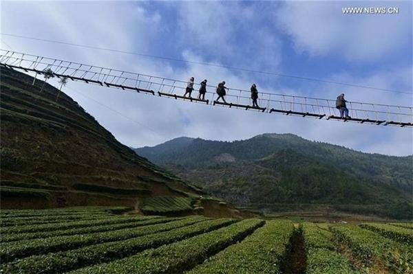 Nhiều du khách đã đến đây để trải nghiệm cảm giác mạnh và chiêm ngưỡng vẻ đẹp của vườn trà xanh bát ngát giữa đồi núi. (Ảnh: Internet)