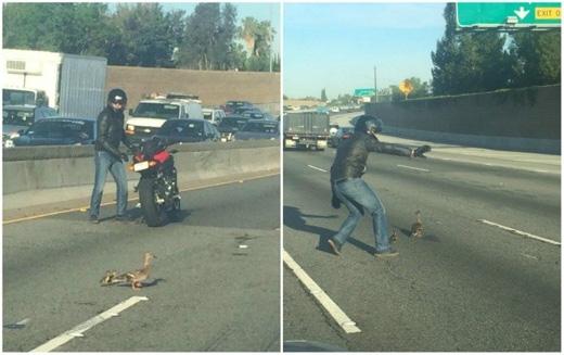 Người đàn ông này chặn xe lại để giúp bầy vịt băng qua đường an toàn. (Ảnh: Internet)