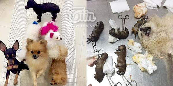 Hình ảnh từng khiến cư dân mạng phẫn nộ khi những chú cún chưa kịp chào đời đã bị kẻ gian hãm hại.