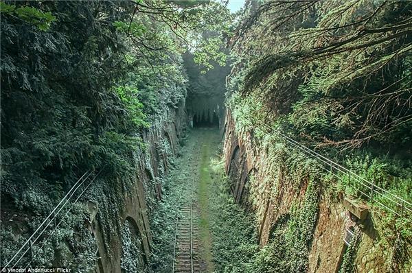 Chemin de fer de Petite Ceinture là một tuyến đường sắt trọng yếu ở Paris vào năm 1852, nhưng đến năm 1934 thì bị bỏ hoang và từ đó trở thành một thánh địa cho những người yêu thích thiên nhiên và yêu thích sự lãng mạn.(Ảnh: Internet)