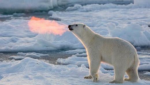 """Chú gấu """"phun lửa"""" khiến nhiều người thích thú."""