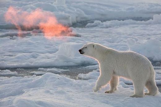 """Thích thú trước hiện tượng gấu """"phun lửa"""", băng đá bốc cháy ở Bắc Cực"""