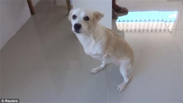 Chú chó đã được nhiều người biết tới nhờ nỗ lực vượt lên số phận.(Ảnh: Reuters)