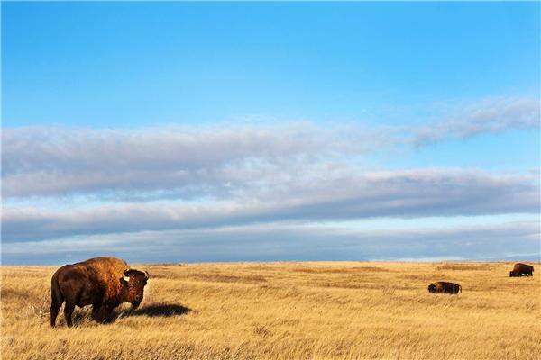 Đứng vị trí thứ 5 là vườn quốc gia Theodore Roosevelt (Bắc Dakota, Mỹ),đã được xây dựng hơn 100 năm.Ảnh:New York Times