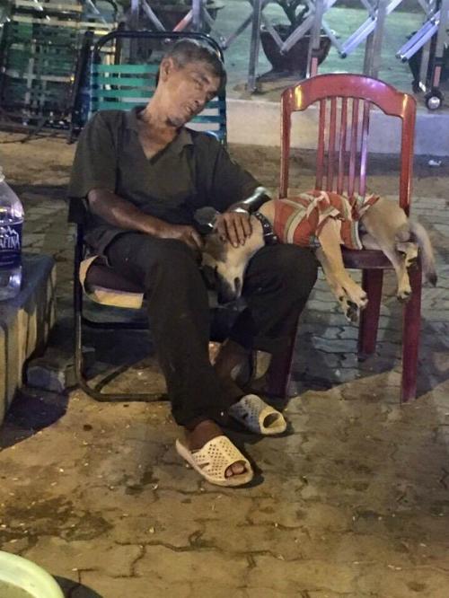 Chú chó nằm yên trên đùi người đàn ông khốn khổ.