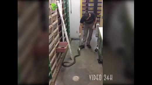 Rùng mình với nghề cho rắn ăn