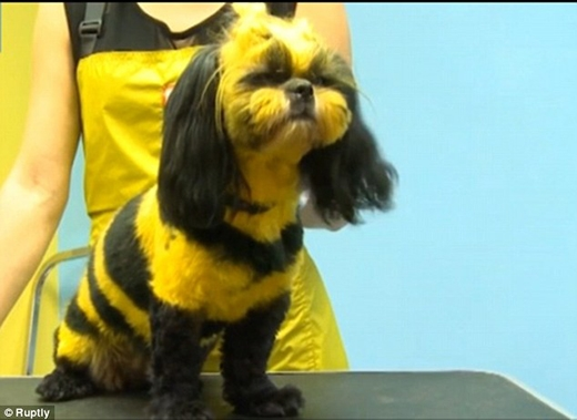 """""""Em lại thích bộ cánh như những chị ong cơ."""" (Ảnh: Internet)"""